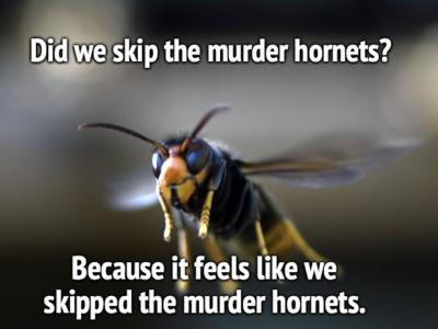 Murder Hornet Meme